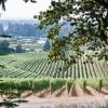 Sokol Blosser vineyard-4