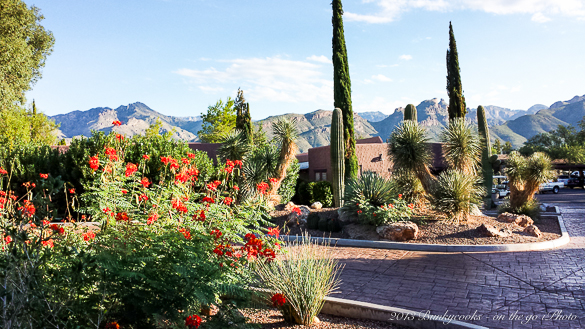 what is the value of customer information to canyon ranch