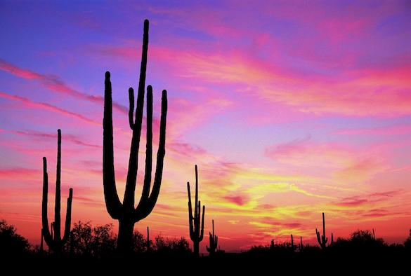 * Sunset in the Sonoran Desert