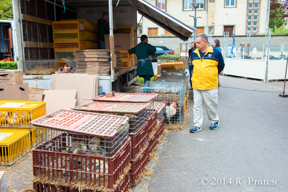 The markets sell live poultry