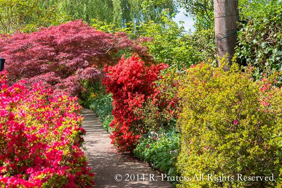The azaleas were also in bloom
