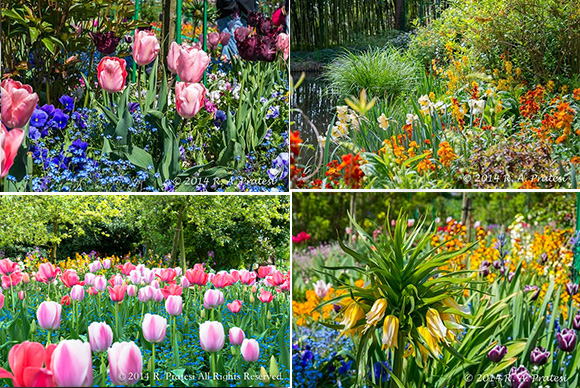The flowers of Monet's garden
