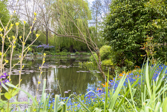 Monet's garden and pond - Just like one of his paintings