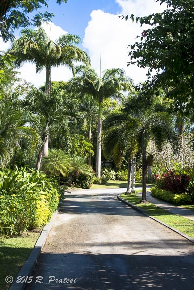Lush tropical landscaping is throughout both properties