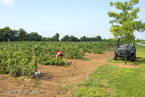 Ambrosia Farm - Finchville, KY