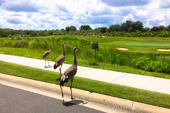 We made new friends at the golf course