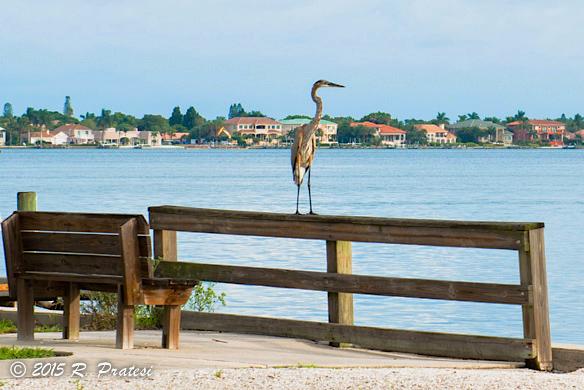 Bird watching at the pier