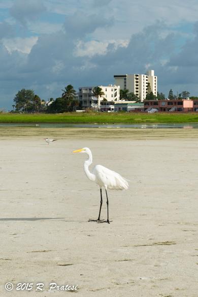 Birds enjoy the beach, too