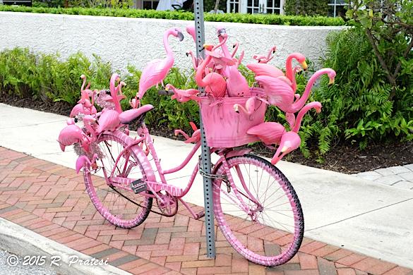 "Doctor Nik's famous flamingo bike - bringing ""good juju"" your way"