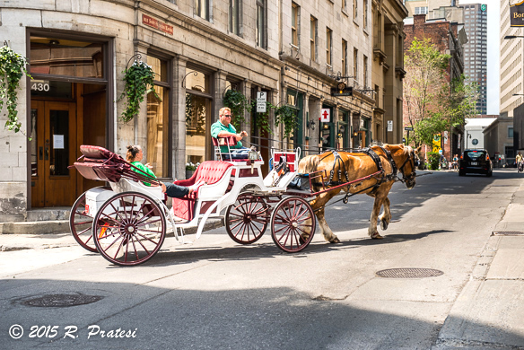 Take a carriage ride through the streets of Old Montréal