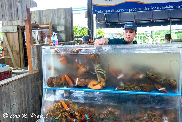 Fresh lobsters at Jean-Talon Market