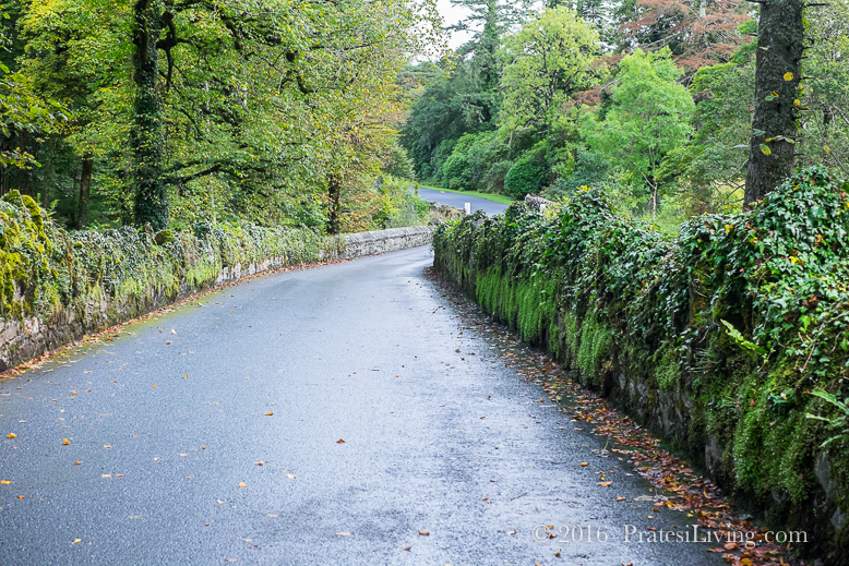 Narrow Roads of Ireland (1 of 1)
