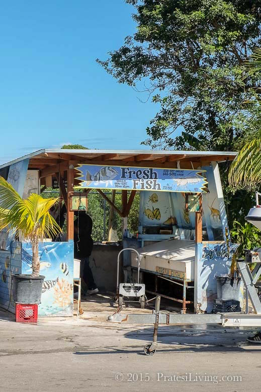 The emerging culinary scene and culinary fusion expo 2015 for Bahamas fish market