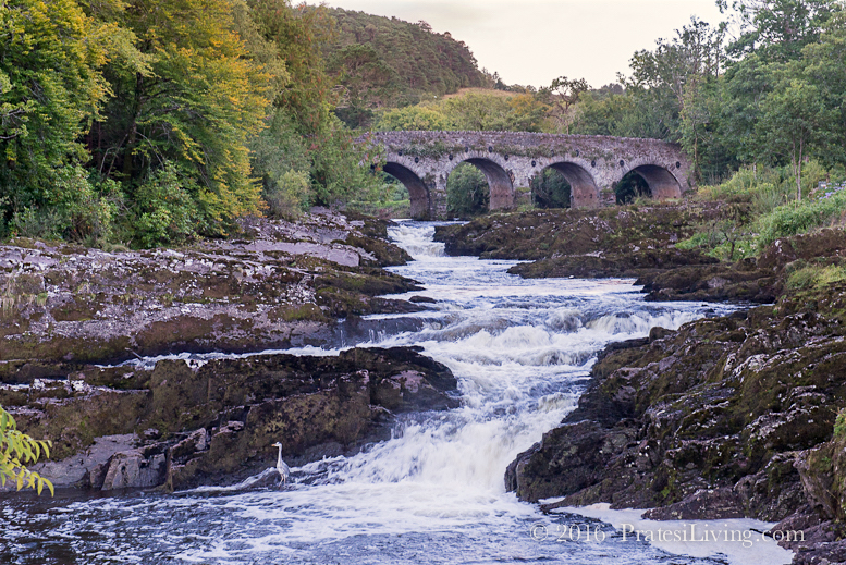 Some of the best trout and salmon fishing in the world is here in these rivers