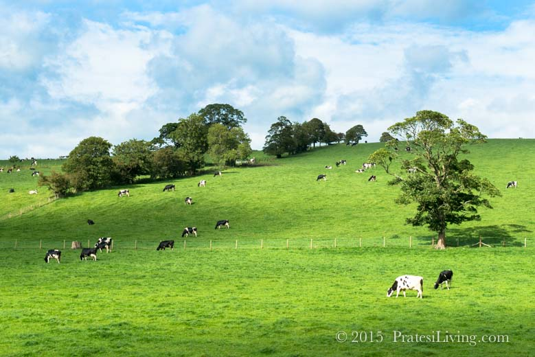 The lush green countryside of Northern Ireland