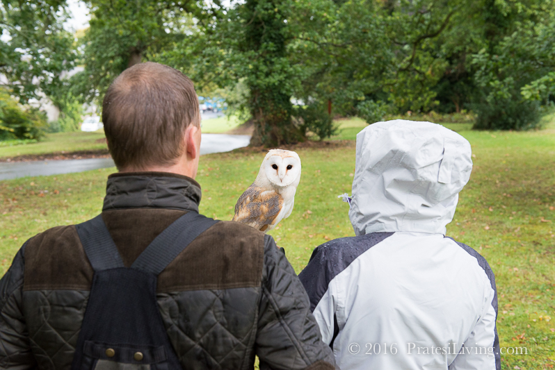 With the Barn Owl