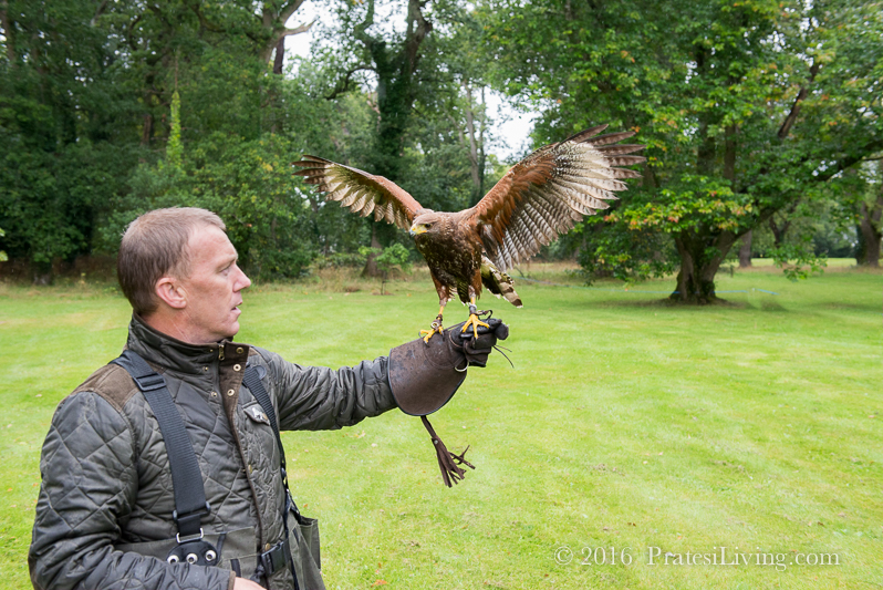 John would send the bird off from his hand