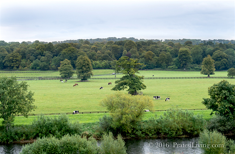Grounds and pasture at the estate