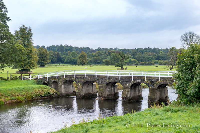The River Nore offers some of the best fishing in Ireland
