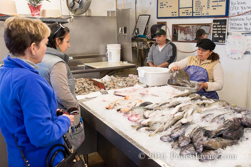 Selecting our fish with Courtney of Taste Carolina