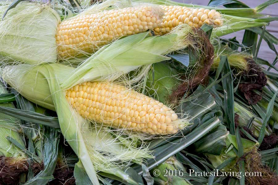 Yellow corn is all we have seen so far this summer