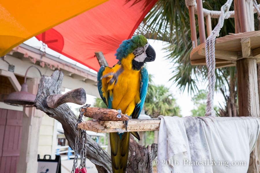 Marianne the parrot at Marina Bar & Grill