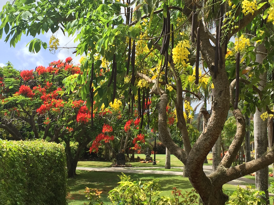 Botanical Gardens (Photo credit - Christi Douglas)