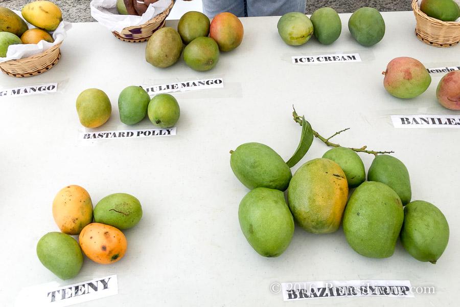 Lots of mangos