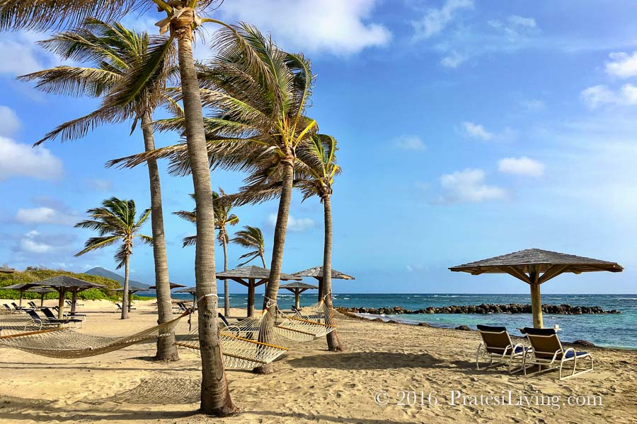 nisbet-beach-and-palm-trees
