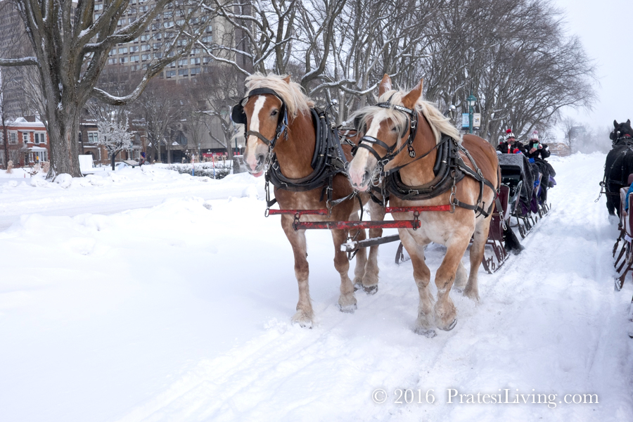 Sleigh rides on the Plains of Abraham